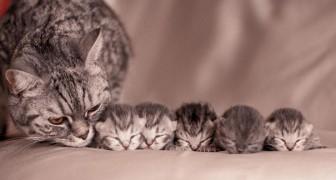 Extreem schattige foto's van moederpoezen en hun jongen