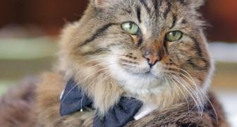 Voici le plus vieux chat du monde: pas moins de 121 ans de sagesse féline!