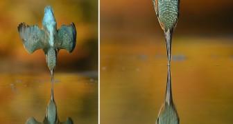 Dopo 6 anni e 720.000 scatti, un fotografo ottiene la foto che cercava da sempre