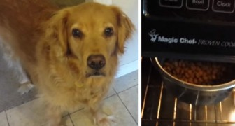 Hunden vill inte äta torrfoder, men med det här knepet så ändras allt