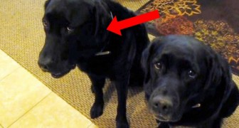 She asks Who stole the cookie?: Look how the dog on the left responds ...