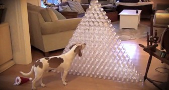 The owner has built a pyramid of bottles: his next move is hilarious !