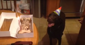 Here is the overwhelming reaction of the dog at the sight of his SPECIAL cake