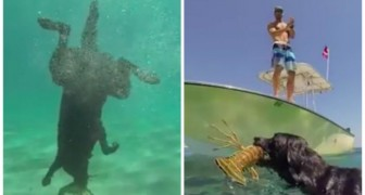 This labrador will surprise you with its special fishing talent !