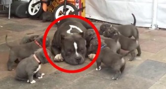 9 wild puppies attack a huge Pitbull: her reaction is stunning