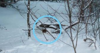 Een man ziet een doos in de sneeuw en redt twee kittens die aan zichzelf zijn overgelaten