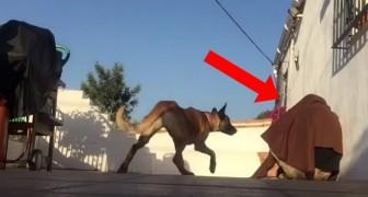 Il retourne chez lui après longtemps et fait une surprise à son chien: sa réaction va vous réchauffer le cœur