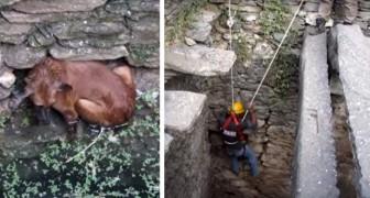 Un cane cade in un pozzo e rischia di affogare: godetevi il suo eroico salvataggio