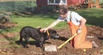 I suoi cani hanno freddo, ma ciò che costruisce lui in 24 ore è insuperabile!