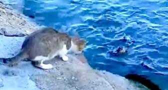Deze kat is aan het vissen in de zee: de manier waarop hij dit doet zal je verbazen!