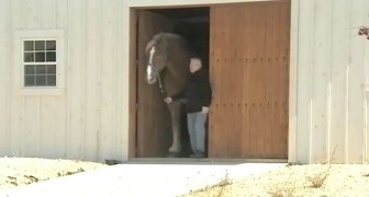 It may seem like a normal horse, but when he comes out of the stable you will be shocked