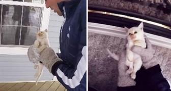 Hij vindt een bevroren kat in de sneeuw, maar de hoop opgegeven is geen optie