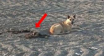 Il motivo per cui questo cane rimane nel deserto lascia di stucco i suoi salvatori