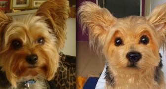 Un peluche è per sempre: ecco una valida alternativa alla clonazione degli animali domestici!