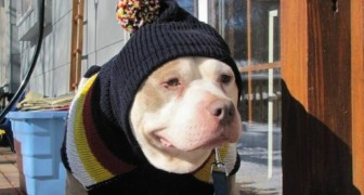 Une femme crée un hospice pour chiens errants pour leur offrir une vieillesse digne