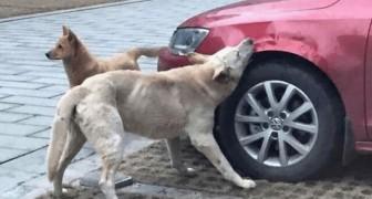 Un uomo caccia via un cane a calci, ma non si aspetta che tornerà per vendicarsi!