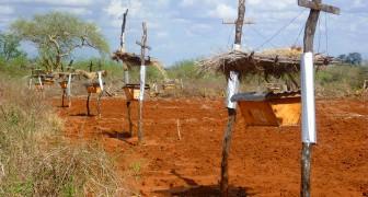 Afrikanische Bauern installieren Bienenstöcke längs ihrer Siedlungen- aber nicht um Honig zu gewinnen!