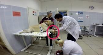 Er zijn maar een paar minuten nodig om een dierenleven te redden: het gebaar van deze hond zal je ontroeren!