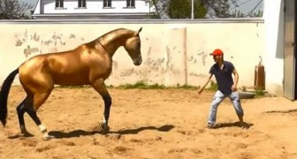 Enjoy the amazing training of one of the most beautiful horses in the world