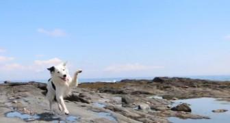 Complicità e divertimento: non crederete a ciò che riesce a fare questo cane!