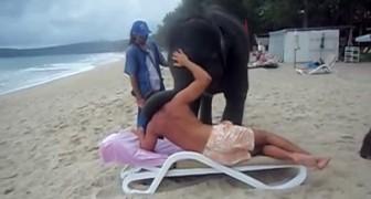 2 elefantini salvati dai bracconieri regalano a un turista un momento che non dimenticherà