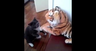 Een kat krijgt een pluche tijger cadeau: hun eerste ontmoeting verloopt niet helemaal vlekkeloos