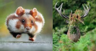 Er werd een wedstrijd georganiseerd voor de grappigste dierenfoto: dit zijn de winnaars
