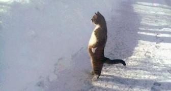 15 adorabili gatti che preferiscono stare in piedi su due zampe