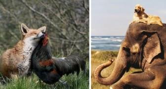 Deze 12 dierenkoppels laten ons zien dat vriendschap geen grenzen kent