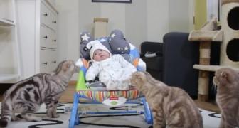 Ze brengen hun baby voor het eerst mee naar huis... de reactie van de 5 katten is geweldig!