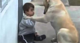 Un cane striscia verso un bambino con sindrome di Down: il loro incontro è una meraviglia