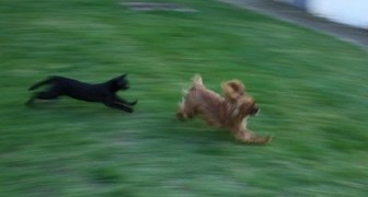 Hunde und Katzen treten gegeneinander an... aber das Finale ist IMMER unerwartet