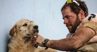 Deze straathond ontmoet een groep atleten en overtreft extreme testen om hen te volgen