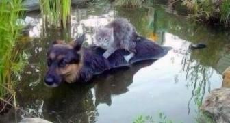 Pendant une inondation, une femme voit quelque chose qui la laisse bouche bée