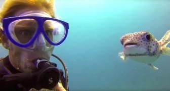 Um peixe encontra um mergulhador: seu comportamento é impressionante