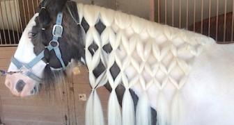 Ecco alcune delle acconciature più originali che si possano fare a un cavallo