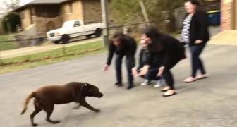 Deze labrador werd 5 jaar geleden als vermist opgegeven: hier zie je hoe hij terugkeert naar zijn familie