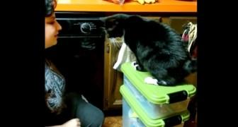 Ze geeft orders aan haar kat... verrassend genoeg voert de kat deze gewoon uit!