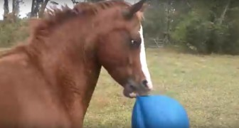No one believed her when she talked about her horse. Then she filmed him...
