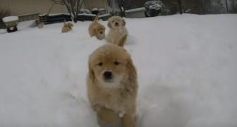 Questi cuccioli giocano per la prima volta nella neve... Non riuscirete a trattenere un sorriso!