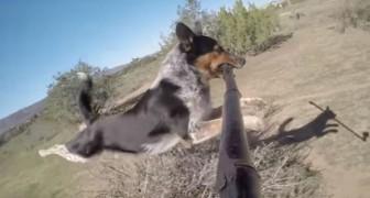 Un cane incredibile ci mostra il miglior modo per usare il bastoncino da selfie... Wow!
