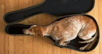 Queste 15 foto dimostrano che per un cane è possibile dormire OVUNQUE...