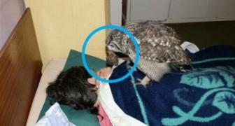Un homme sauve un hibou blessé qui le remercie en apportant des animaux à manger