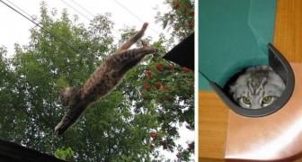 28 foto's van katten die ninja's zijn geworden... zonder hun baasjes hiervan op de hoogte te hebben gesteld!