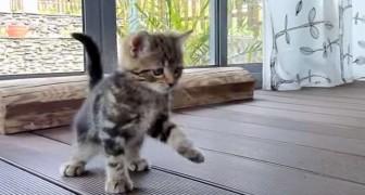 Deze kittens maken kennis met een veger... schattig!