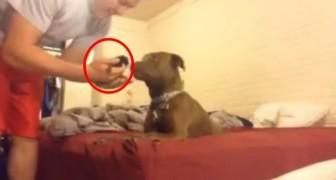 Hij neemt een geredde kitten mee naar huis... de reactie van de pitbull is overweldigend!