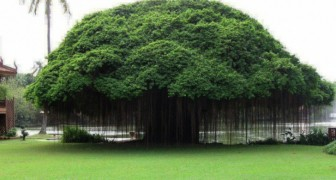 9 alberi maestosi che riassumono tutto lo splendore della natura