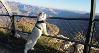 La sua famiglia non lo lascia mai a casa: il fortunato gatto Gandalf ha viaggiato per mezzo mondo