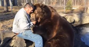 Een man en een ENORME beer laten hun bijzondere vriendschap zien