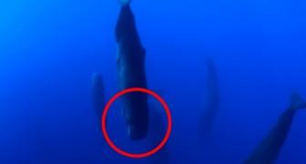 Un uomo cattura un momento raro e affascinante della vita delle balene